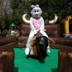 rodeo bull 2.jpg