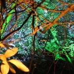 Beautiful tree lighting.JPG